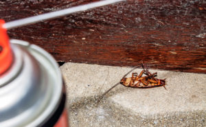 Blatte morte sous insecticide