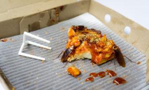 Cafard mangeant des pizzas