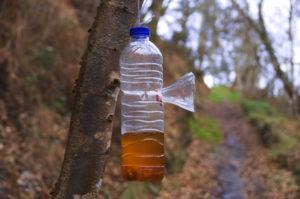 Piège à guêpe avec une bouteille d'eau