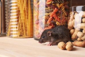 Rat noir maison et pâtes